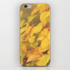 Yellow Fall iPhone & iPod Skin