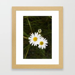 The Daisy In The Middle Framed Art Print