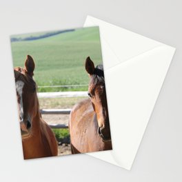 Horse Friends Photography Print Stationery Cards