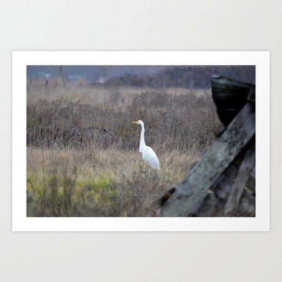 Great Egret  Art Print