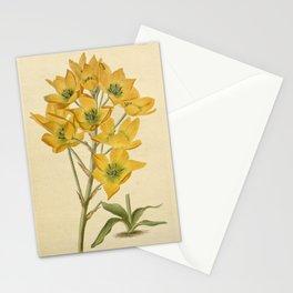Flower ornithogalum aureum23 Stationery Cards