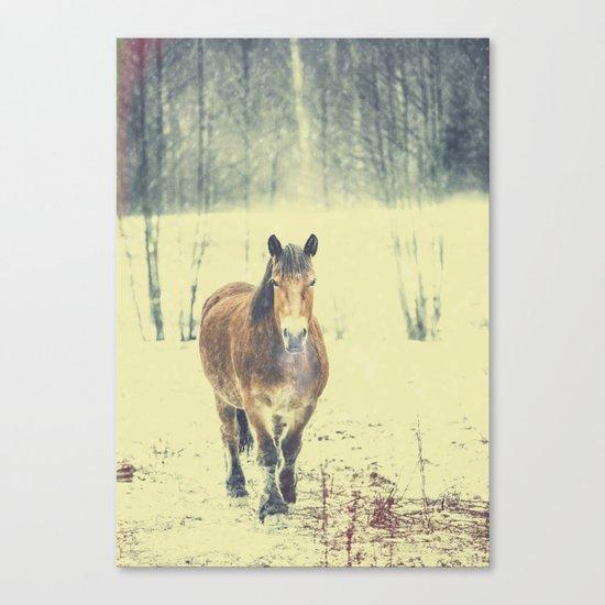 Wandering beauty Canvas Print