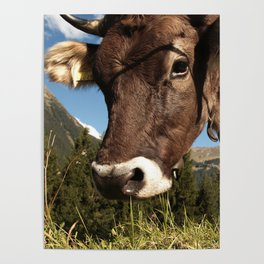 cute cow close Poster
