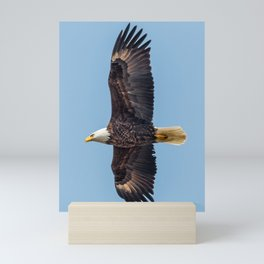 Soaring Bald Eagle in May Mini Art Print