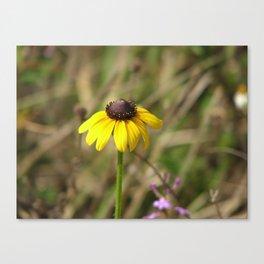 Black eyed susan flower Canvas Print
