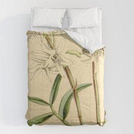 Dendrobium moniliforme (as Dendrobium japonicum) Curtis' 90 (Ser. 3 no. 20) pl. 5482 (1864) Comforters