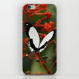 Mocker Swallowtail Butterfly iPhone Skin
