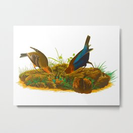 Cowbird Bird Illustration Metal Print