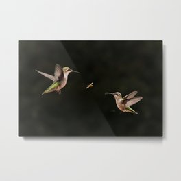 Hummingbirds and bee Metal Print