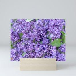 Lilacs Mini Art Print