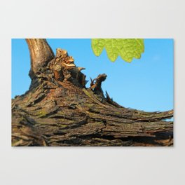 Old and new, amazing infinity of life… Canvas Print
