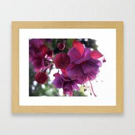 Blooms Framed Art Print