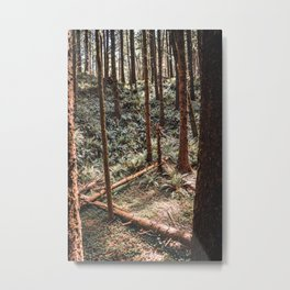 Oregon Coast Forest | Nature in the PNW Metal Print
