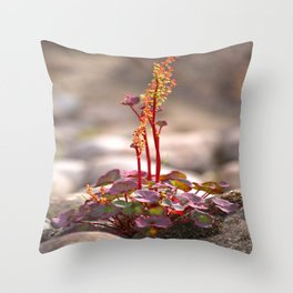 Wildflower between stones scandi landscape Throw Pillow