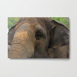 Elephant closeup Metal Print