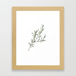 Rosemary Framed Art Print