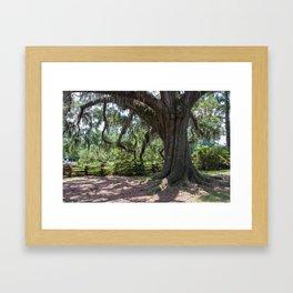 Live Oak Framed Art Print