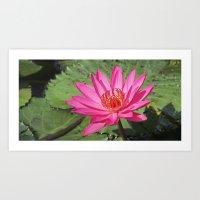 Open Lily Art Print