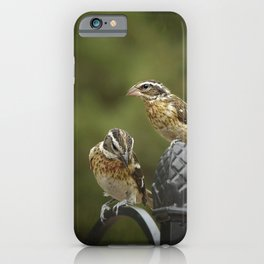 Grosbeaks Three iPhone Case