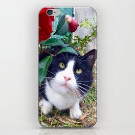 Orazio, the cat of camellias iPhone Skin