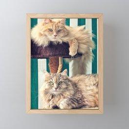 Siberian cats on the cat tree Framed Mini Art Print