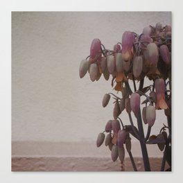Kalanchoe Daigremontiana #1 - 2015 Canvas Print