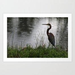 Wild Bird of Paradise Art Print