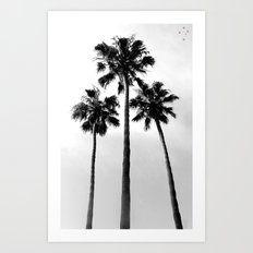 Palm Trees Three Art Print
