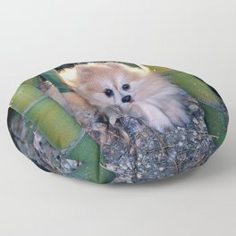Buffy, the Celebrity Pomeranian, in Bamboo Forest Floor Pillow