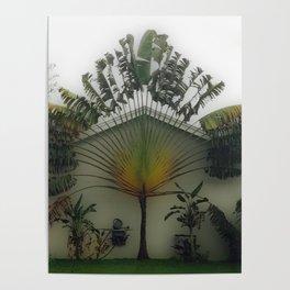Traveler's Palm Poster