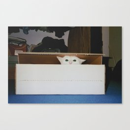 Angriest cat around Canvas Print