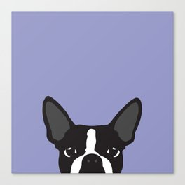 Boston Terrier Violet Canvas Print
