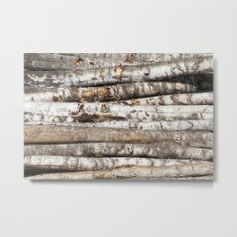 striped birch trunks Metal Print