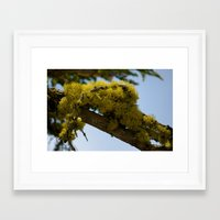 moss Framed Art Prints featuring Moss by Emily Werboff
