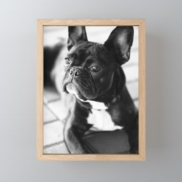 French Bulldog Framed Mini Art Print