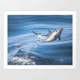 Uncommon Dolphin Art Print