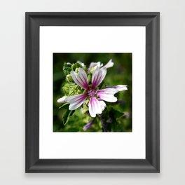 Zebra Mallow Flower Framed Art Print