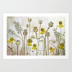 Poppies and Heleniums Art Print