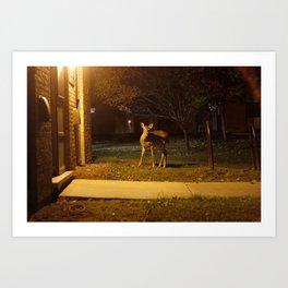 Deer in the Headlights. Art Print