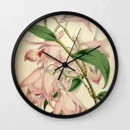 Dendrobium maccarthiae Wall Clock
