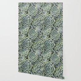 Pale Green Succulent Garden Wallpaper