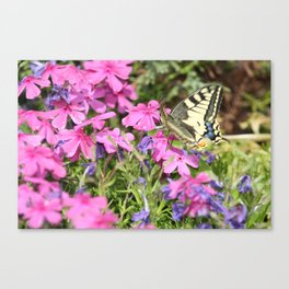 Little butterfly Canvas Print