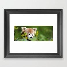 Red Panda 4 Framed Art Print