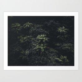 Wildflower Series - Ferns Art Print