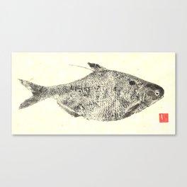 Gizzard Shad Canvas Print