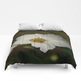 Innocent Comforters