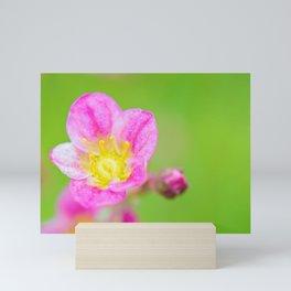 Macro pink flower over green background Mini Art Print
