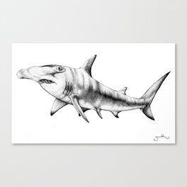 Hammerhead Shark Canvas Print