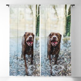 Cute puppy by Mike Baker Blackout Curtain