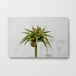 Thistle bud and snail Metal Print